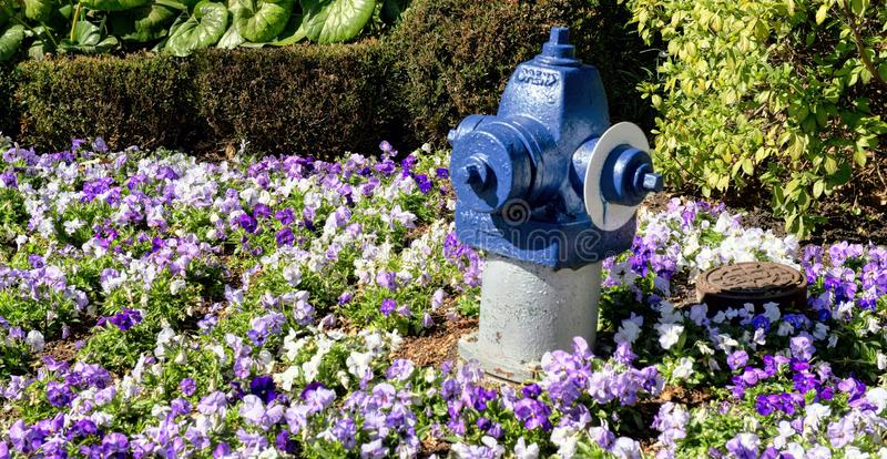 Boca de incendios en flores fotografía de archivo libre de regalías