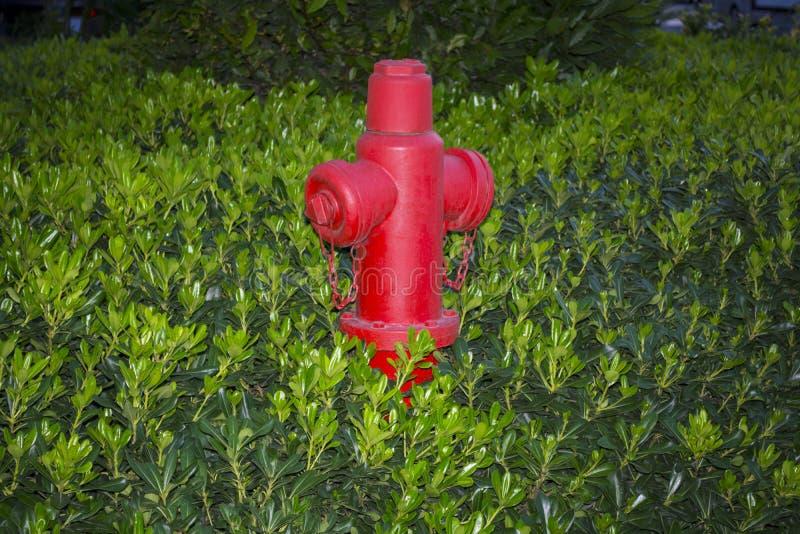 Boca de incendios roja en un fondo de la hierba verde La bomba de la boca de incendios o de fuego, representa el punto de la cone foto de archivo