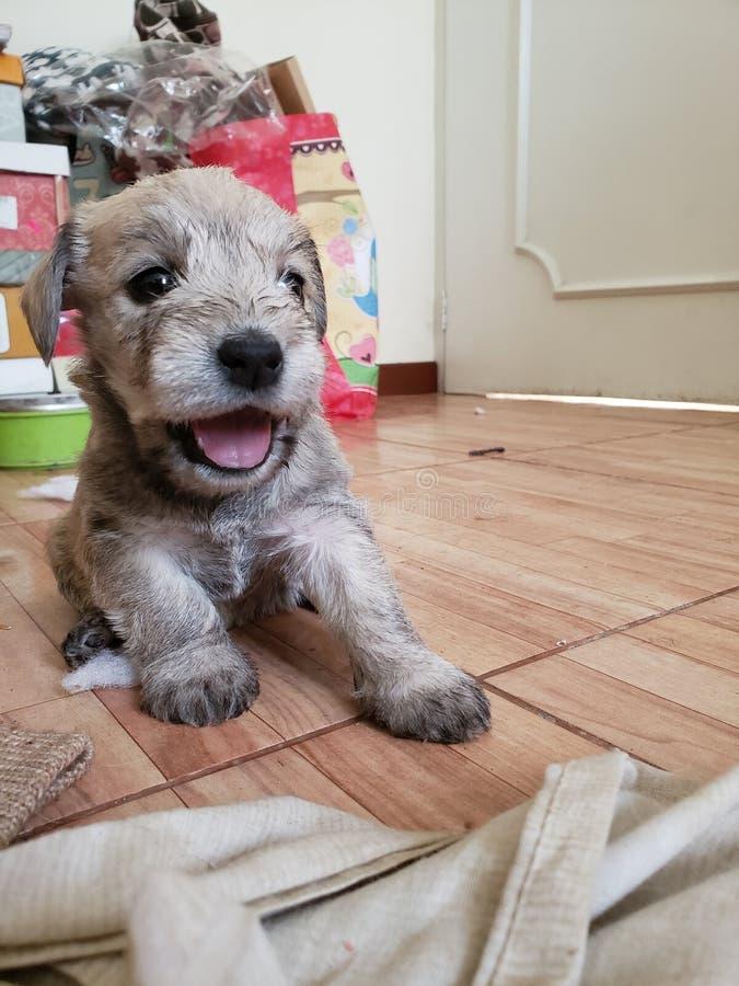 Boca del perrito imagenes de archivo