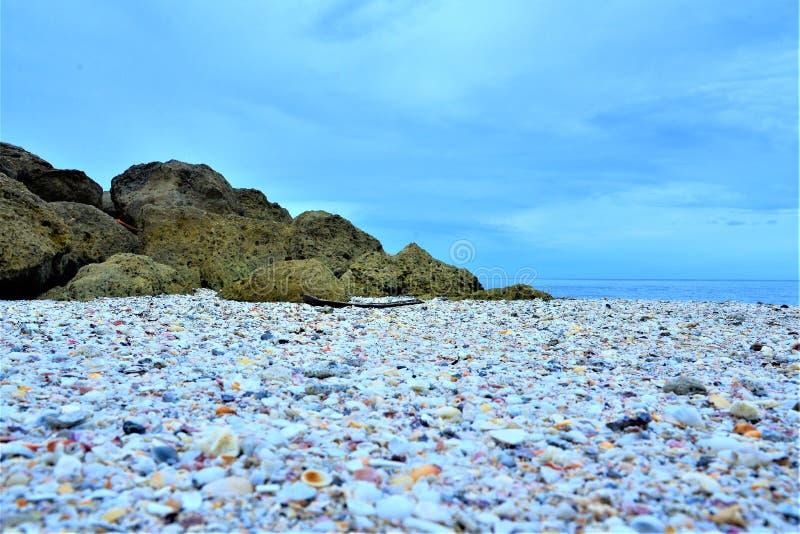 Boca Raton, spiaggia di Florida ha un tesoro trovato di tesoro delle conchiglie fotografia stock libera da diritti