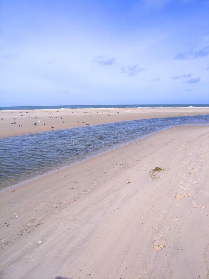 Bocca di fiume del Torrens fotografia stock