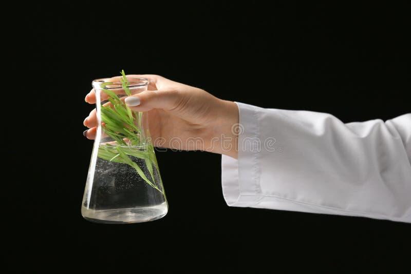 Boccetta della tenuta del tecnico di laboratorio con la pianta su fondo scuro immagini stock