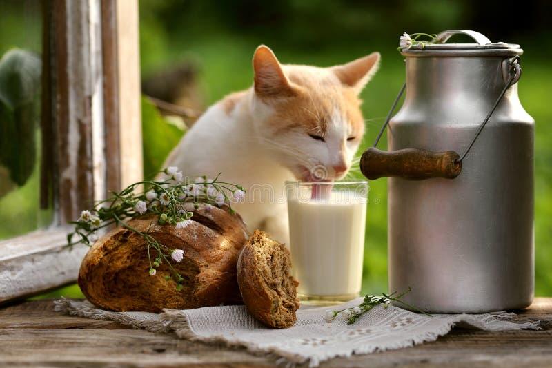Bochenek żyta mleko i chleb zdjęcia stock