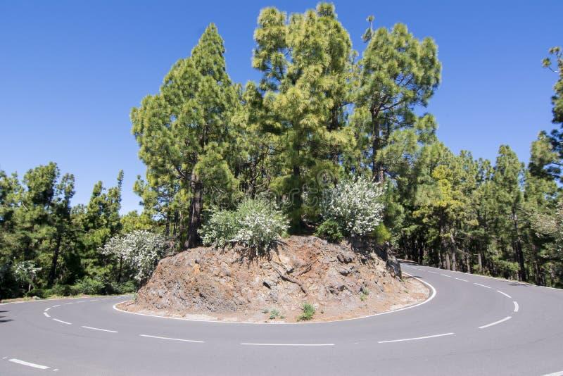 Bochtige weg in Anaga-bergen, Tenerife, Canarische Eilanden, Spanje royalty-vrije stock afbeelding