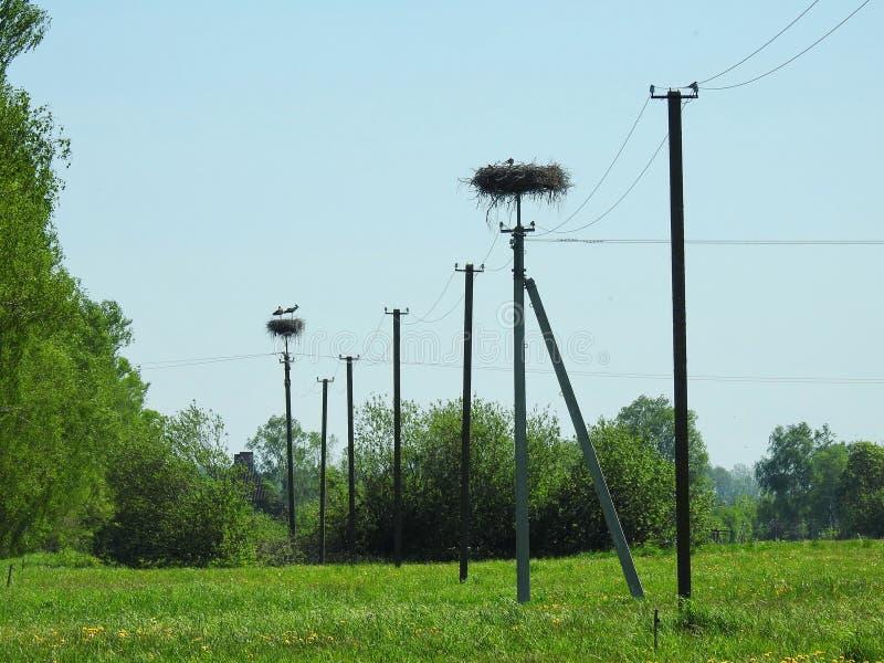 Bocian gniazduje na linii energetycznej fotografia stock