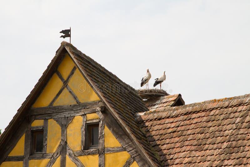 Bocian na dachu połówka cembrował dom w wiosce w Alsace zdjęcia royalty free