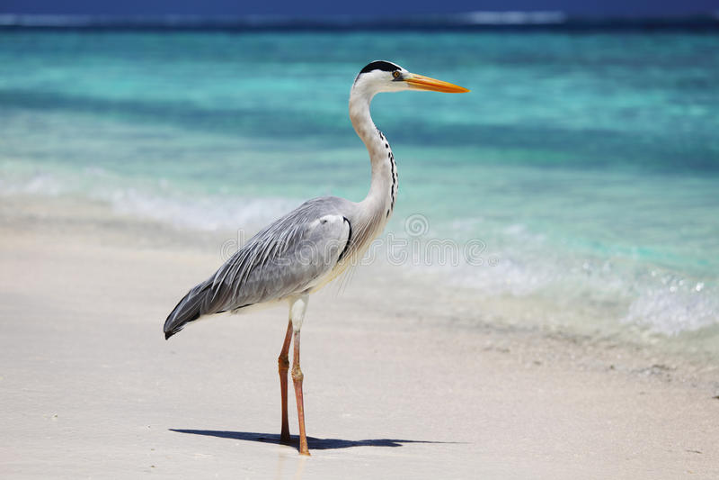 Bocian na oceanie fotografia royalty free