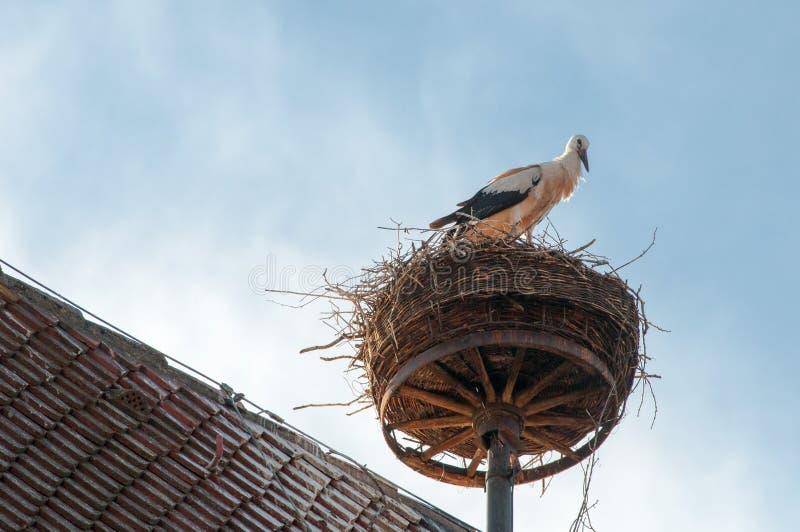 Bocian na swój gniazdeczku na dachu obrazy royalty free