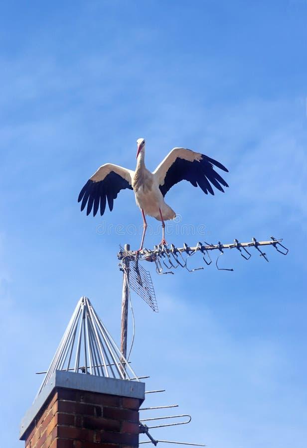 Bocian rozprzestrzenia swój skrzydła na antenie fotografia stock