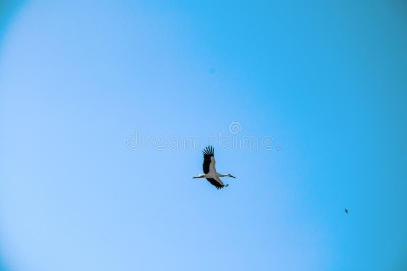 Bocian w niebieskim niebie obrazy stock
