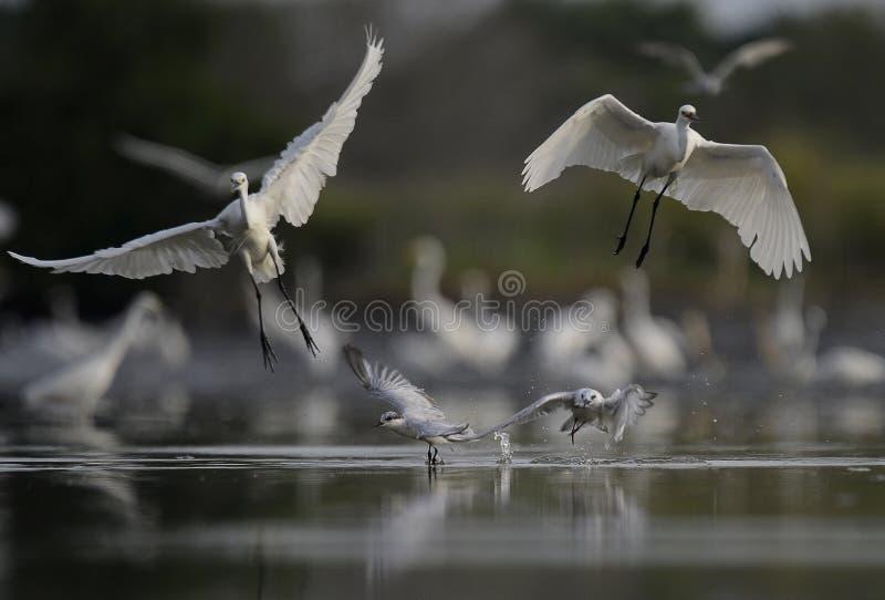 Bocian wziąć daleko i latający wpólnie zdjęcia stock