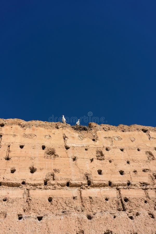Bocianowy obsiadanie na medievil historycznej ścianie zdjęcie royalty free