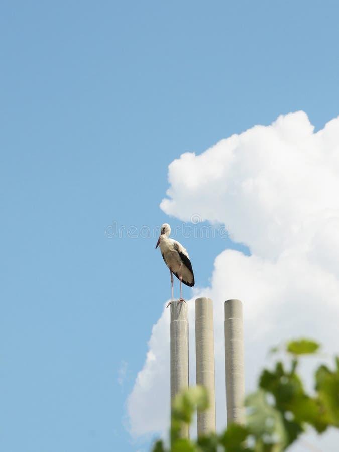 Bocianowy tyczenie na dachowej wysokości w niebie fotografia stock