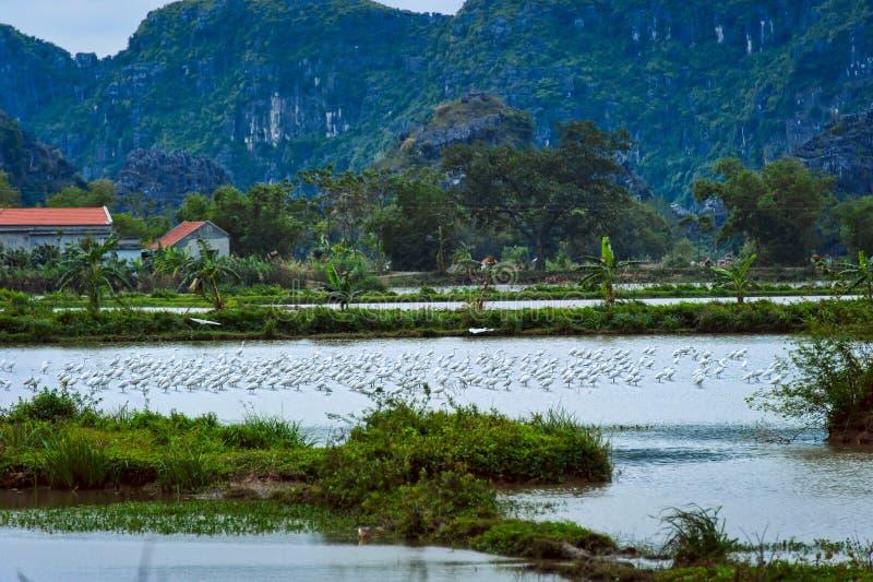 Bociany i jezioro Park Narodowy Ninh Binh Wietnam zdjęcia stock