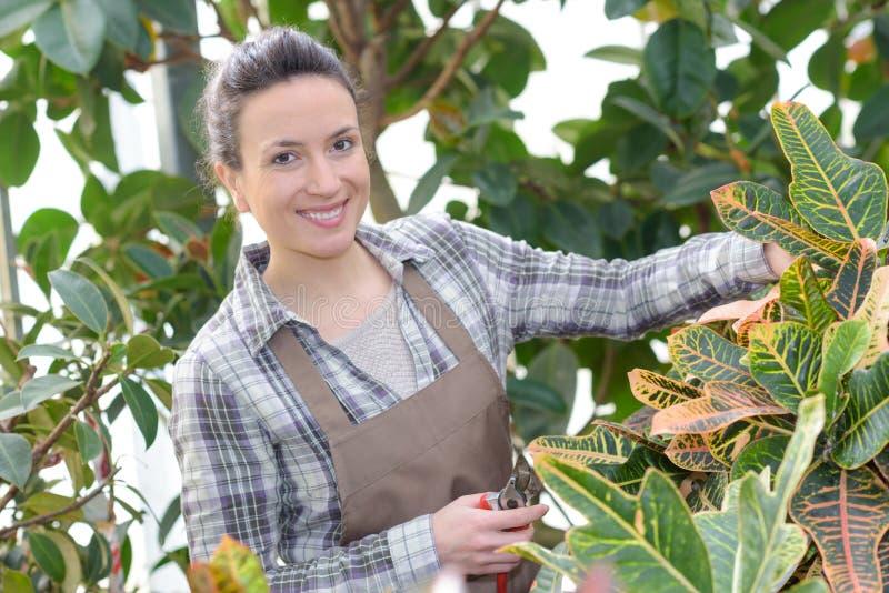 Bocznego widoku żeńska ogrodniczka przycina rośliny na zewnątrz szklarni zdjęcie royalty free