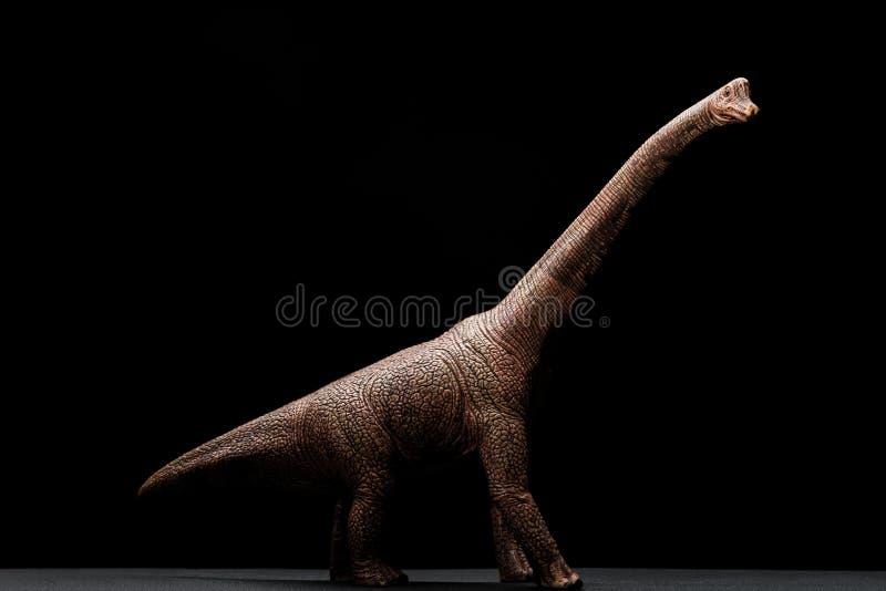 Bocznego widoku brachiosaurus zabawka na zmroku obrazy stock