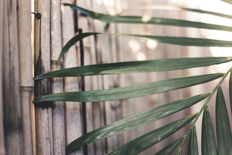 Bocznego widoku fotografia od naturalnej bambus ściany z palmowym liściem zdjęcia royalty free