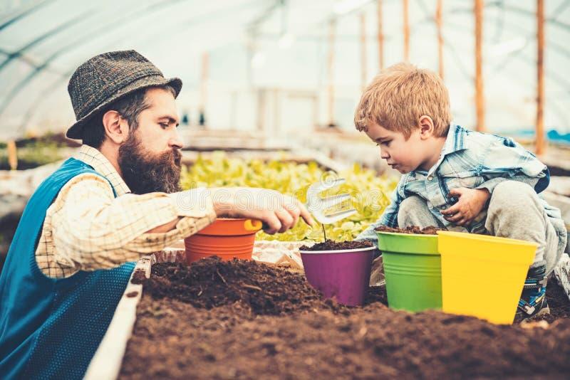 Bocznego widoku ojca pomaga dzieciak zasadzać kwiatu z ręki rozwidleniem Brodaty mężczyzna uczy jego syna ogrodnictwo Domowa eduk fotografia royalty free