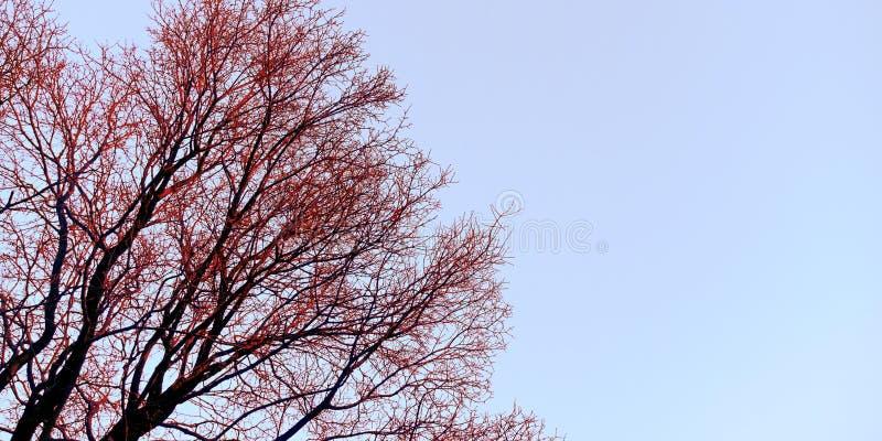 Boczny niebo widok z piękną drzewo zapasu fotografią zdjęcia stock