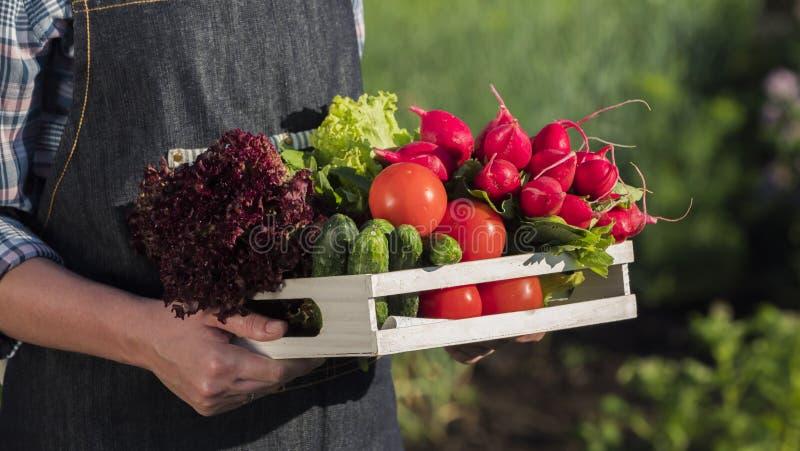 Boczny widok rolnik trzyma drewnianego pudełko z setem świezi dojrzali warzywa od jego ogródu Zako?czenie strza? obraz stock