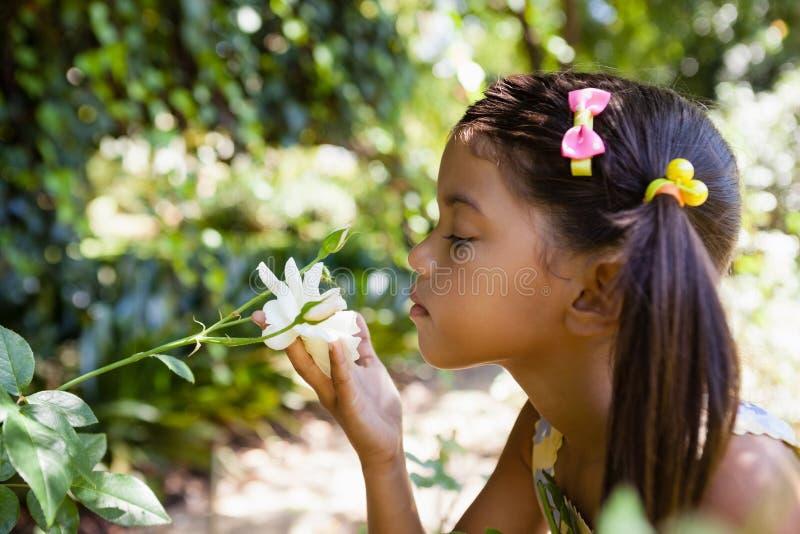 Boczny widok wącha białego kwiatu dziewczyna obraz stock
