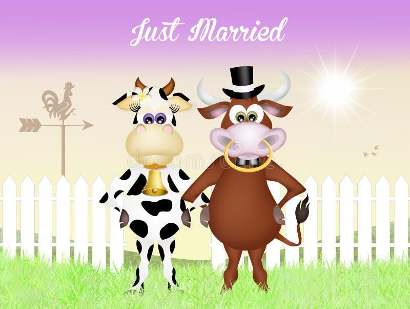 Boda entre la vaca y el toro stock de ilustración
