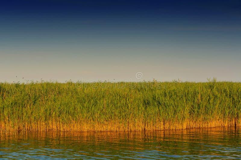Boddenlandschaft på Fischland royaltyfria foton