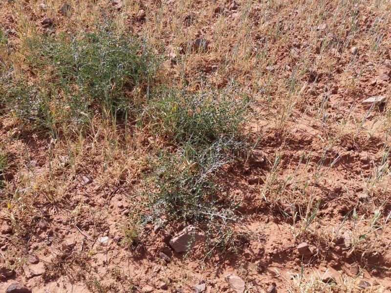Download Boden stockbild. Bild von boden, marokko, wald, nave - 90236815