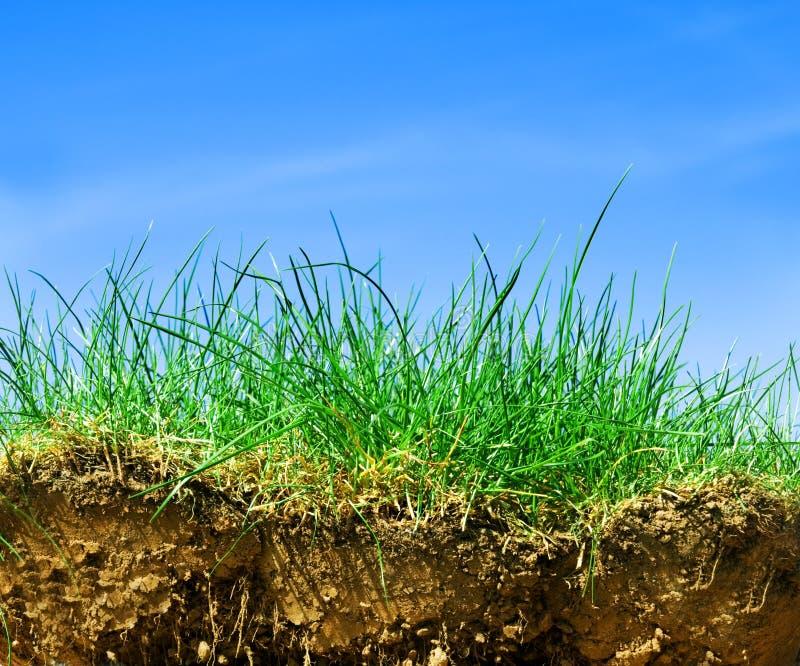 Boden, Gras, Himmelquerschnitt stockfoto