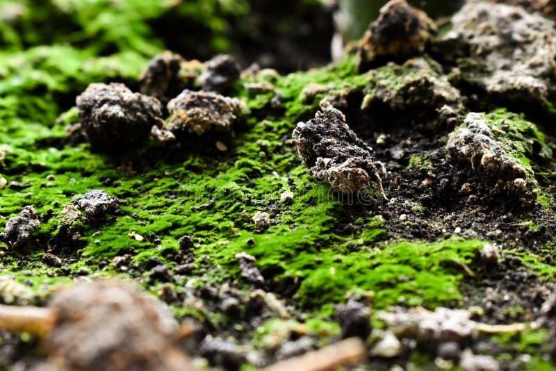 Boden mit grüner Moosnahaufnahme lizenzfreie stockfotos