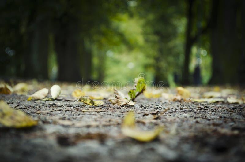 Bodenhöhe der gefallenen Blätter auf Baumstamm lizenzfreies stockfoto