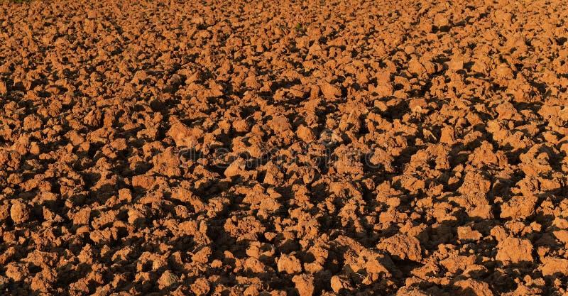 Bodenklumpen auf dem Reisgebiet vor Betriebsreis für braunen Hintergrund stockfotografie
