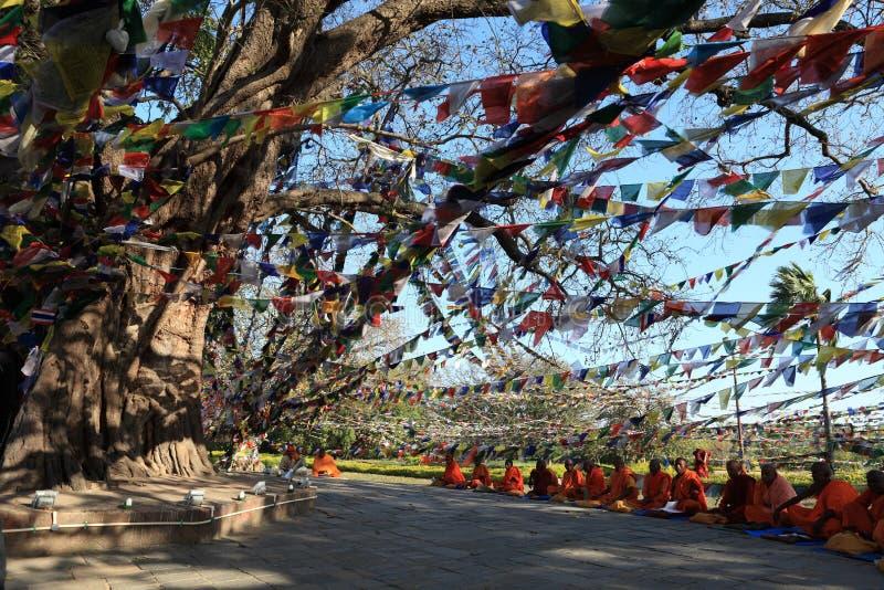 Bodhi树在蓝毗尼菩萨的出生地 库存图片