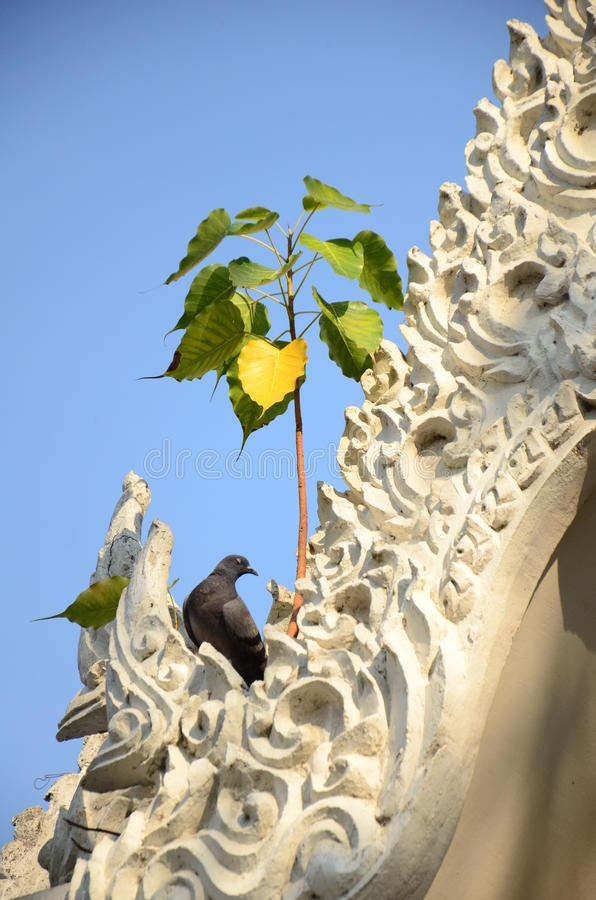 Bodhiboom op tempeldak royalty-vrije stock foto