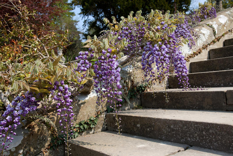Bodnant Gärten lizenzfreies stockbild
