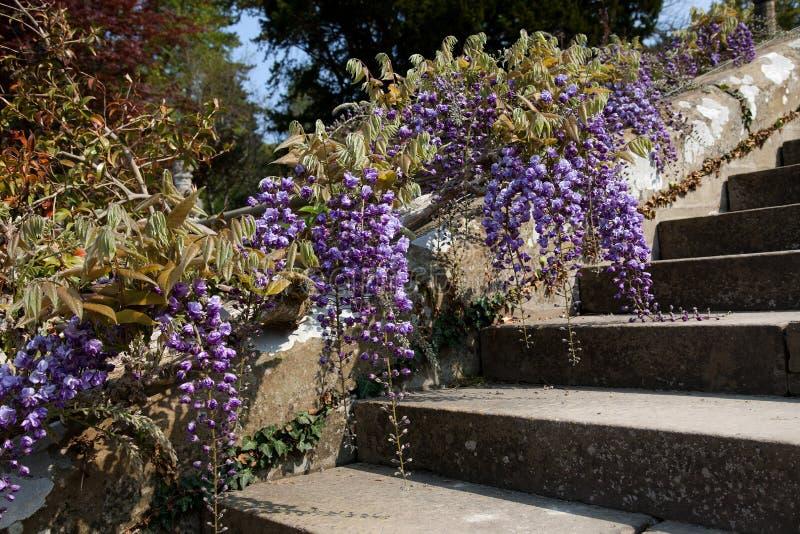 Bodnant Gärten stockfotografie