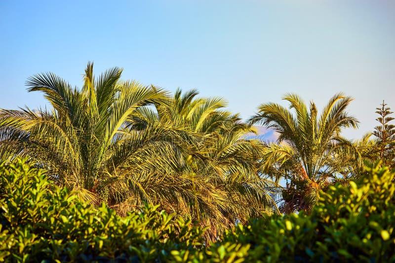 Bodrum Turkiet: Palmtr royaltyfri foto