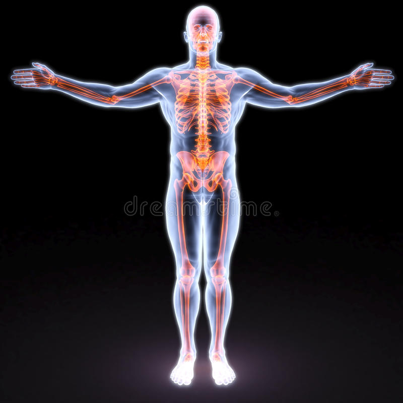 Body. Man's body under X-rays. bones are highlighted in red royalty free illustration
