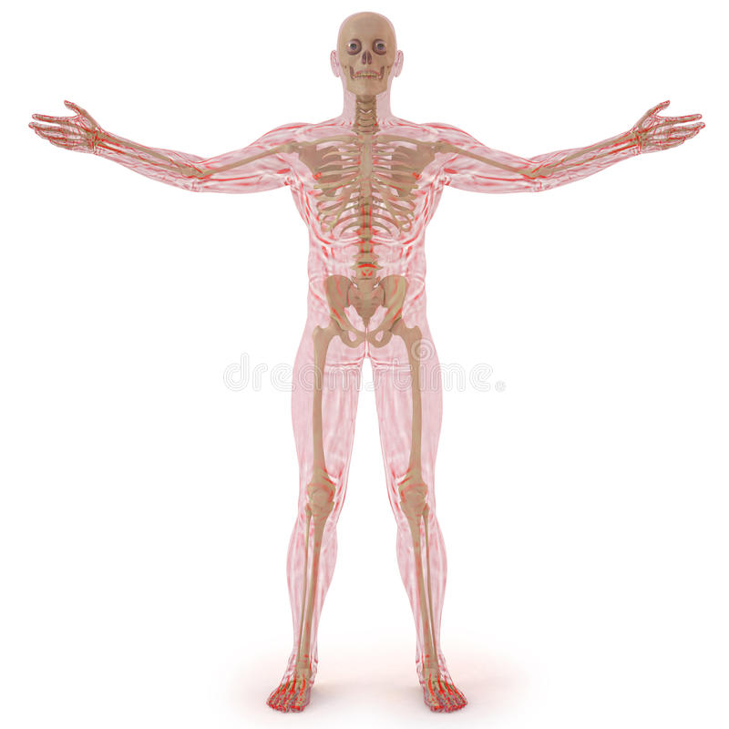 Download Body stock illustration. Image of body, chest, doctor - 19802646