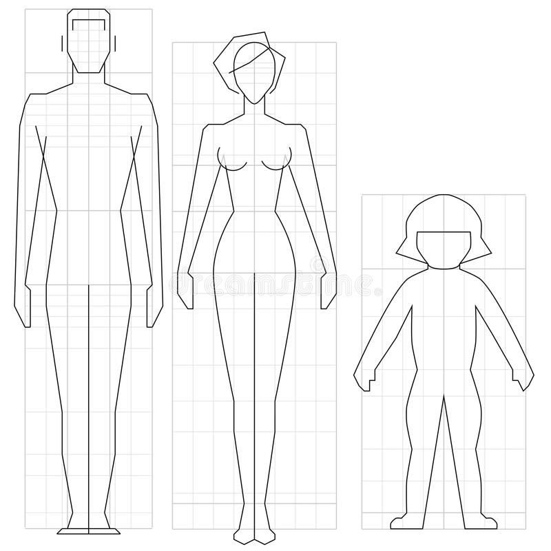 Download Body stock vector. Image of constitution, outline, scheme - 21844880