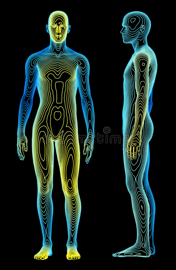 Body Analysis. A medical concept of the human body