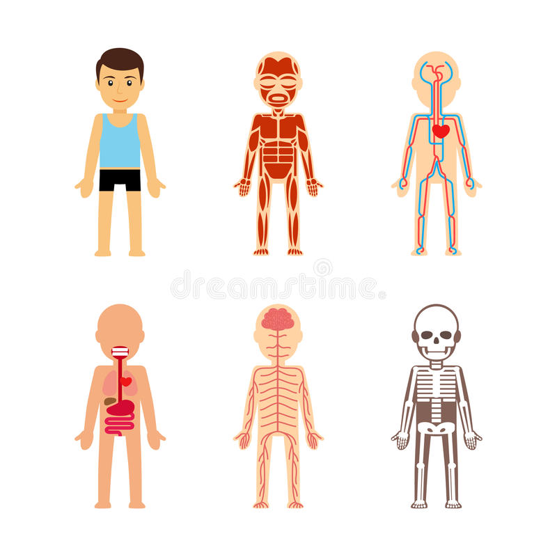 Body anatomy vector stock vector illustration of cute 64902602 download body anatomy vector stock vector illustration of cute 64902602 ccuart Image collections