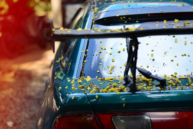 the body of car dirty from flowers and leaves royalty free stock image
