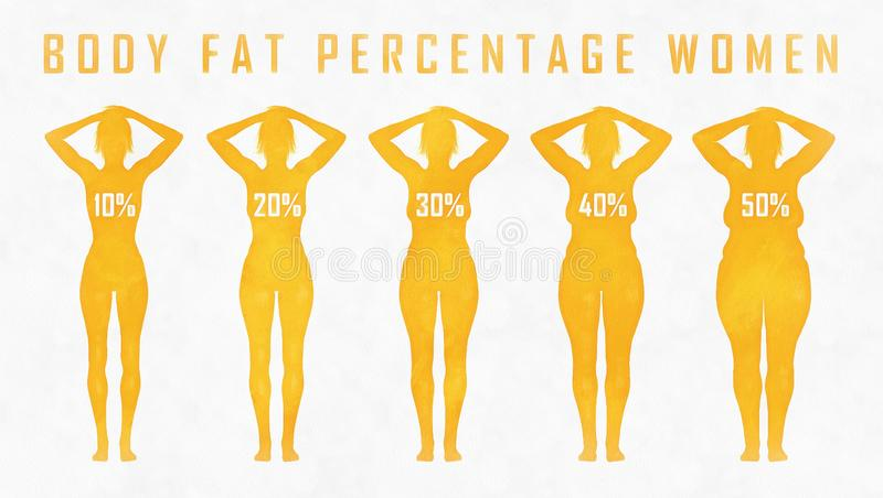 Body fat percentage woman. A woman diets and exercises before and after from fat to fitness stock illustration
