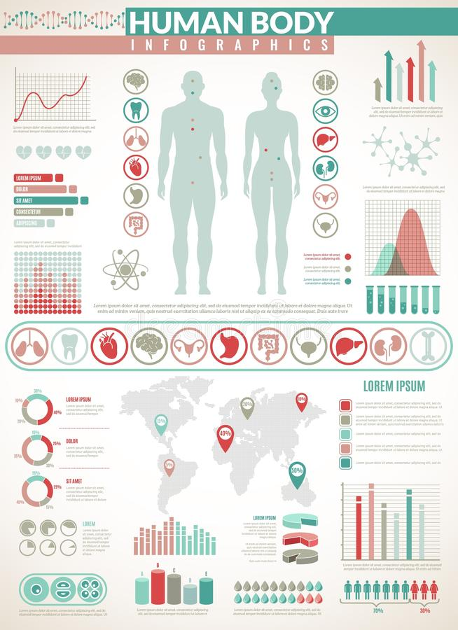 Body infographics. Human health medical vector anatomy infographic with chart, diagrams and graphs, inner organ icons vector illustration
