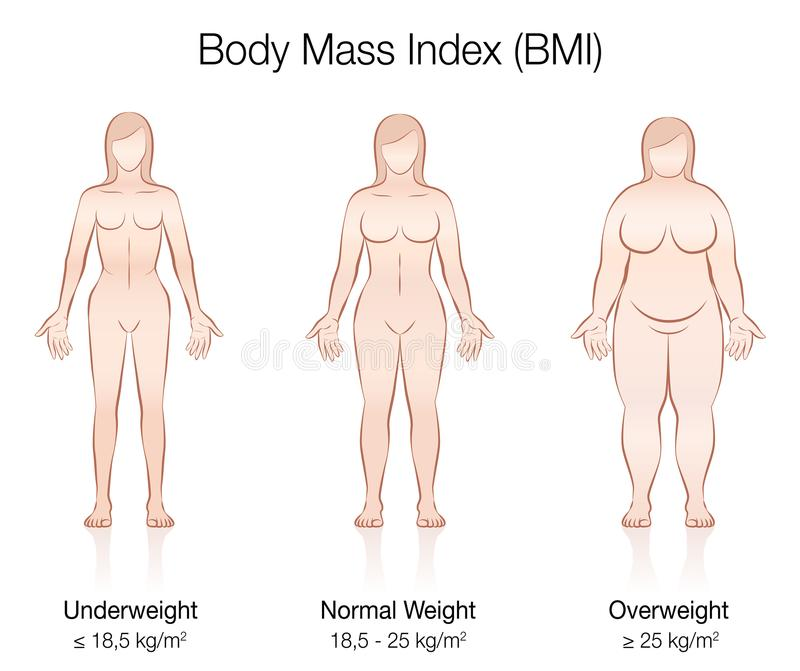 Body Mass Index BMI Female Body Thin Fat Normal. Body Mass Index BMI. Underweight, normal weight and overweight female body. Isolated vector illustration of stock illustration