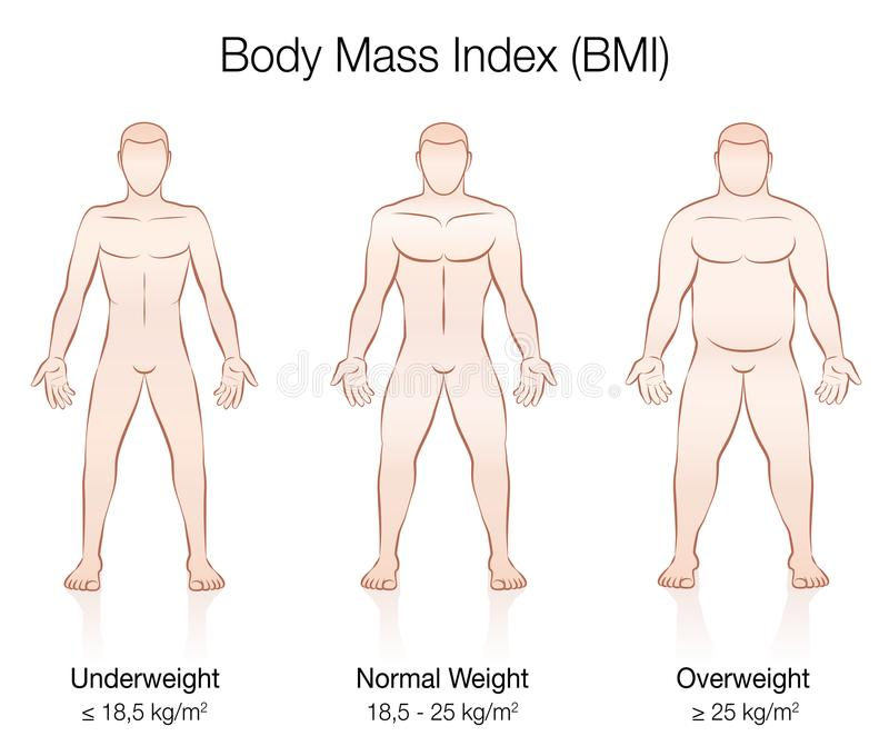 Body Mass Index BMI Male Body Thin Fat Normal. Body Mass Index BMI. Underweight, normal weight and overweight male body. Isolated vector illustration of three stock illustration