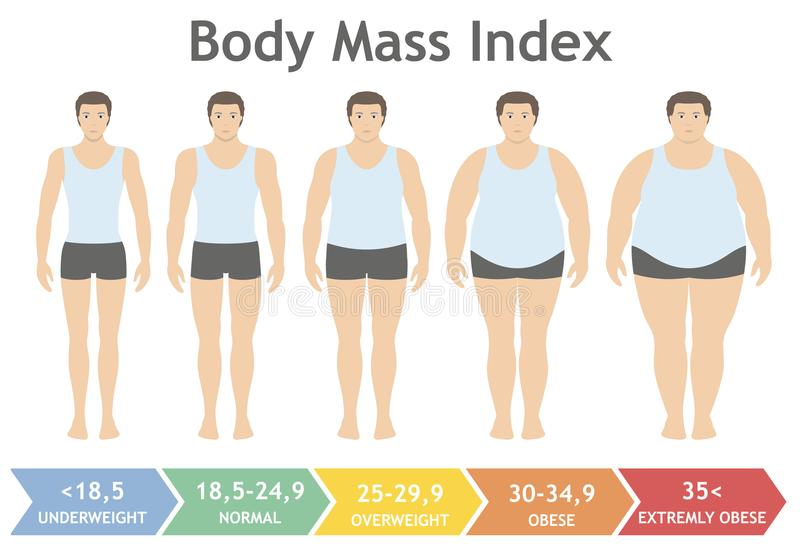 Body mass index vector illustration from underweight to extremely obese in flat style. Man with different obesity degrees. Male body with different weight royalty free illustration