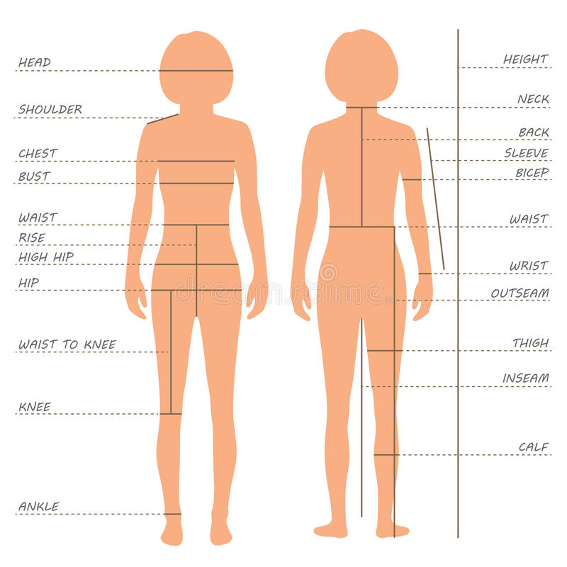 Free Body Measurements Size Chart, Royalty Free Stock Photos - 52185398