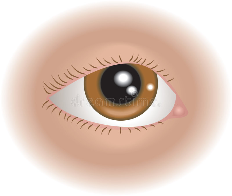 Body parts eye. An illustration of a human eye, no meshes used royalty free illustration